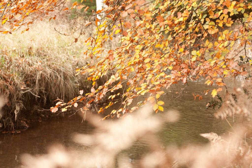 jre autumn 020