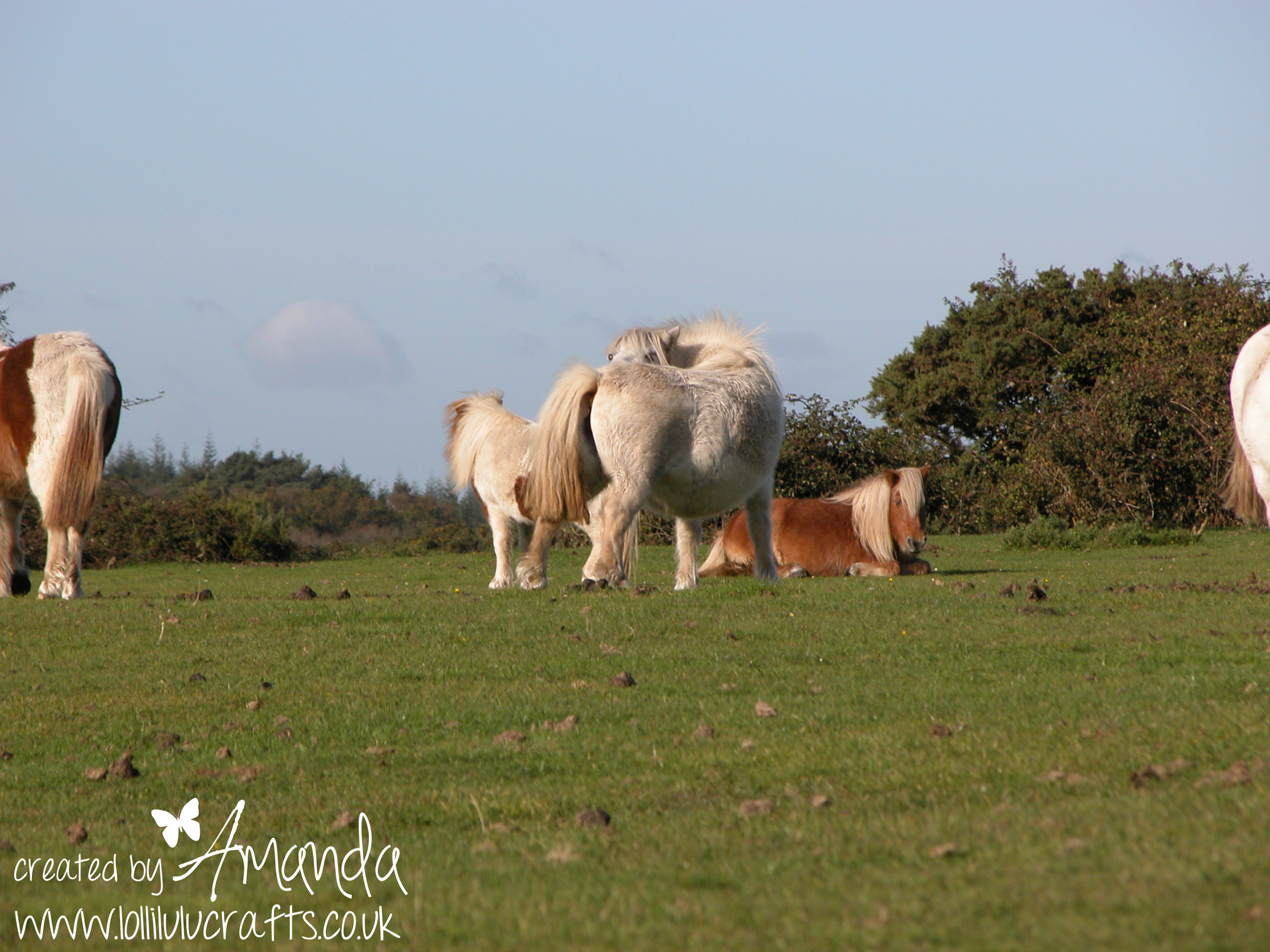 new forest animals 001